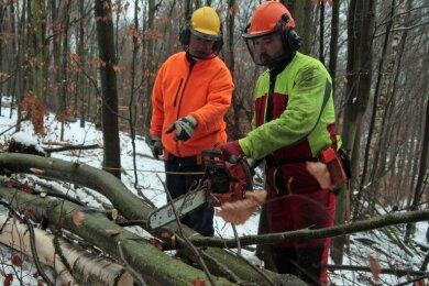 """<p class=""""artikelinhalt"""">Bei jedem Wetter sind Marcel Zeun und die anderen Auszubildenden bei der Arbeit im Wald. Unter Anleitung von Ausbilder Henry Döring (links) fällt der Lehrling im strömenden Regen Bäume. </p>"""