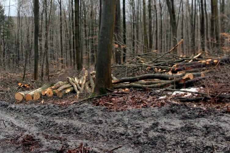 Im Poppenwald bei Wildbach läuft gegenwärtig ein umfangreicher Holzeinschlag. Das Ganze hinterlässt sichtbare Spuren, was wiederum Spaziergänger verärgert. Die Wege zum Beispiel sollen jedoch nach Abschluss der Arbeiten wieder in Ordnung gebracht werden.
