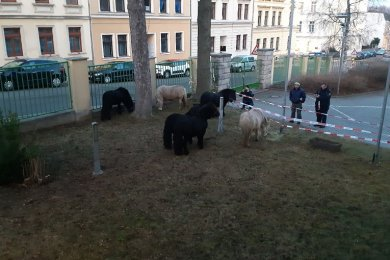 """Beamte des Polizeireviers Werdau sind am Freitag sechs tierische """"Verdächtige"""" ins Netz gegangen."""