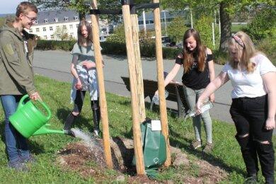 Thomas, Amelie, Luise und Evangeline (von links) beim Angießen der Amerikanischen Roteiche. Für insgesamt drei Bäume rund um den Bärenstein hat die Klasse 7a der Rückert-Oberschule eine Baumpflegepatenschaft übernommen.