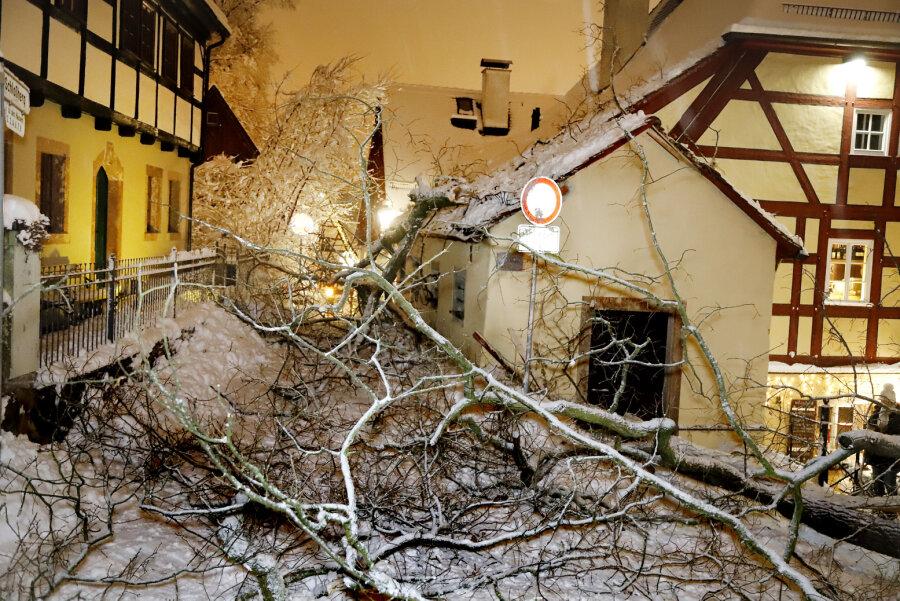 Baum stürzt ins Fachwerkviertel am Schloßberg - Schulweg gesperrt