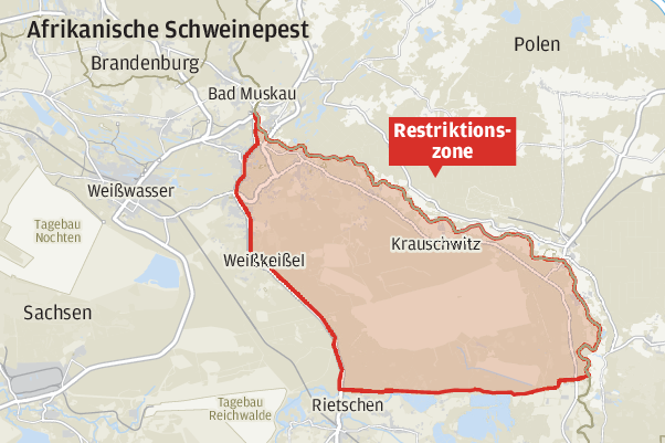 Afrikanische Schweinepest: Erste Sperrzone in Sachsen