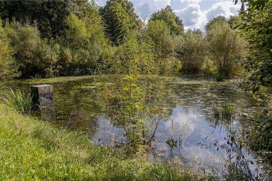 Drei Teiche gibt es im Schraderpark in Auerbach. Für zwei von ihnen (im Bild der mittlere) steht ab November eine Baumaßnahme. Die verlandeten Gewässer werden vom Bewuchs rundherum befreit, entschlammt und mit einer Lehmschicht ausgestattet. Zudem werden die Mönche saniert.