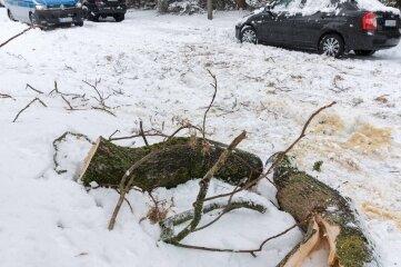 Von einem Baum an der Albert-Einstein-Straße in Freiberg ist am Sonntagmittag ein starker Ast abgebrochen. Die Feuerwehr befreite einen Pkw und entfernte das Bruchholz von der Straße.