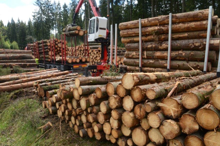 Holzeinschlag im Schallerbachtal zwischen Beerheide und Brunn
