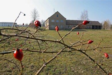 Auf dem ehemaligen Gärtnerei-Gelände sollen Eigenheime entstehen.