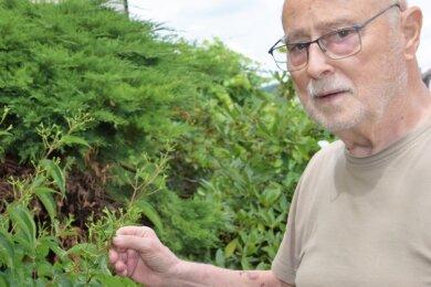 Sieben Söhne des Himmels nennt sich der Strauch im Garten von Peter Tillack aus Reichenbach. Ursprünglich nur in wenigen chinesischen Provinzen zuhause, entfaltet das Gewächs ab Ende August eine cremeweiße Blütenpracht und rote Fruchtstände.