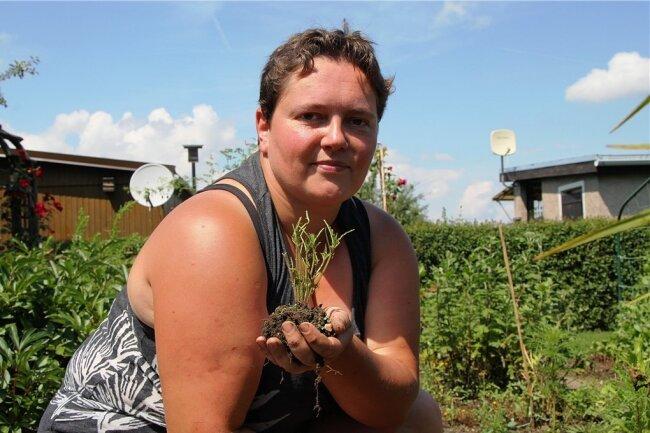 Die gelernte Gärtnerin Nicole Kawalek hält das in der Hand, was eine Schnecke von einer Tagetes übriggelassen hat: nur die Stengel. Dennoch setzt die Lengenfelderin diese Pflanzen, quasi als Köder, um Schnecken von anderen Nutzpflanzen wie Salat fernzuhalten. Sie hat aber auch noch andere Tipps.