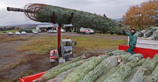 Die Firma Garten- und Landschaftsbau Rosenkranz aus Eisenberg schwört auf die frisch geschlagenen Weihnachtsbäume aus Härtensdorf und holt Exemplare in verschiedenen Größen. Sie versorgt damit unter anderem Firmen,Kliniken, Altenheime und Kirchen.