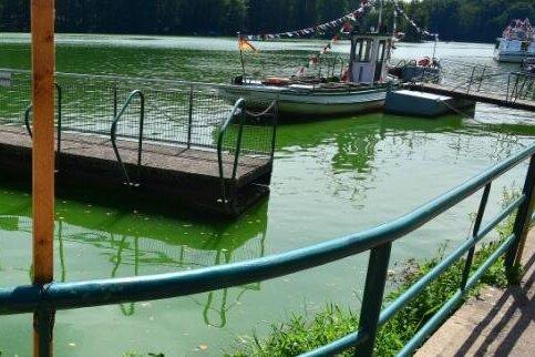 Auch im vergangenen Jahr war das Wasser in der Talsperre Kriebstein von Blaualgen verfärbt.