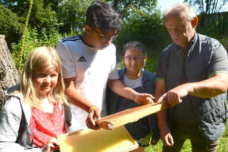 """Im Ferienprogramm des Begegnungszentrums """"Vitamin B"""" Falkenstein zeigte der Insektologe Reiner Tschaschke den Schülern Katharina, Ali und Shireen (von links) im Umweltzentrum die Bienenwaben."""