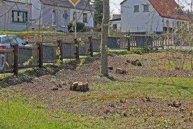 Die dicken Äste der Haselnussbüsche auf dem Spielplatz in der Vogelsiedlung auf der Seite zum Lerchenweg sind von Mitarbeitern des Garten- und Friedhofsamtes knapp über dem Erdboden abgesägt worden.