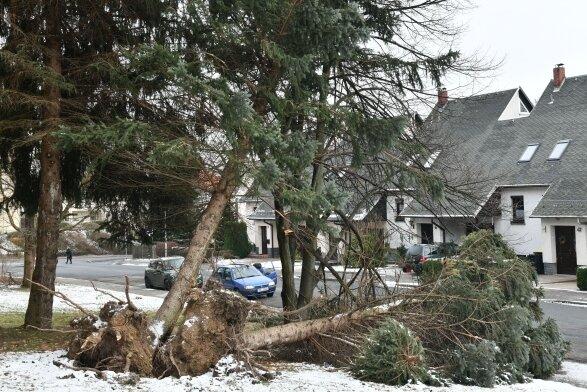 Sturmschäden einer Baumgruppe an der Straße der Einheit in Freiberg.