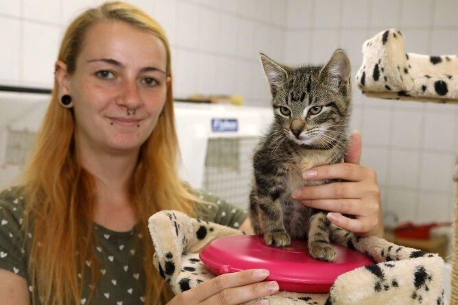 Auch diese kleine Katze, hier mit Pflegerin Larissa Lämmel, fühlt sich auf einem Wärmekissen im Tierheim Langenberg wohl.