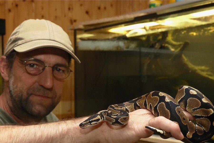 Tobias Rietzsch mit einem Königspython, die schon länger in der Rödlitzer Wildtierauffangstation lebt.