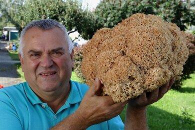 Diese 3,4 Kilogramm schwere Krause Glucke, einen heimischen Speisepilz, entdeckte Bernd Rößler im Wald bei Zwönitz.
