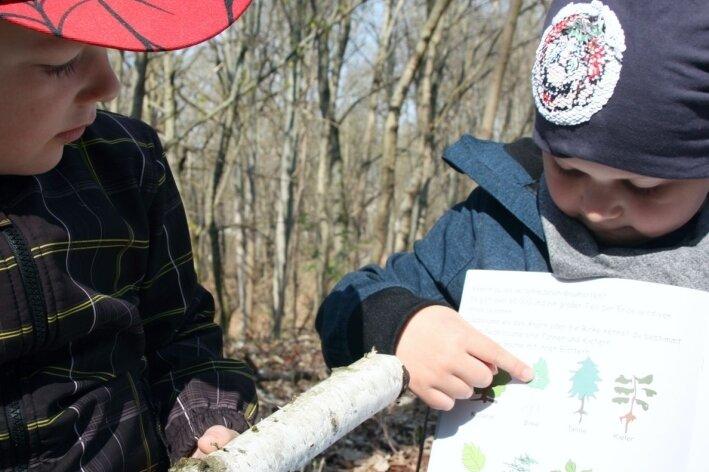 Kindgerechtes Baum-Wissen