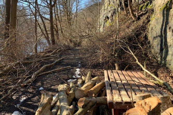 Durch Rodungs- und Baumfällarbeiten ist der Wanderweg am Elsterufer derzeit unpassierbar und gesperrt.