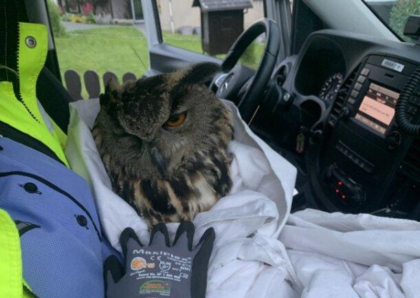 Sie brachten das Tier zu einer Falknerei in Auerbach.