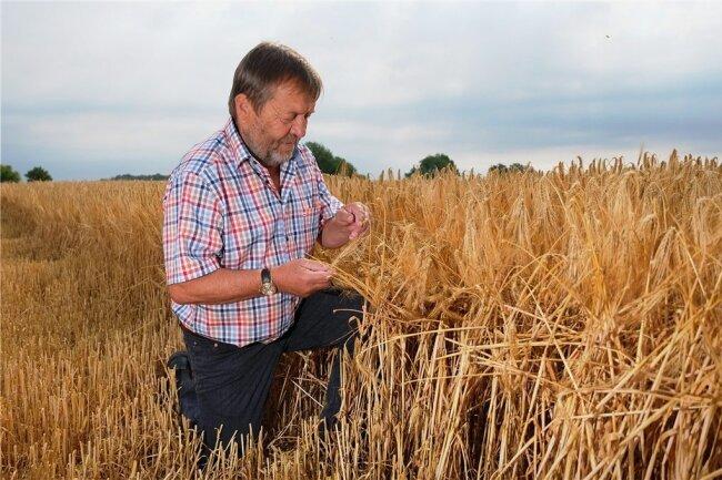 Wolfgang Vogel, Landwirt und Präsident des Landesbauernverbandes, in seinem Wintergerstenfeld. Hier ist alles in Ordnung.