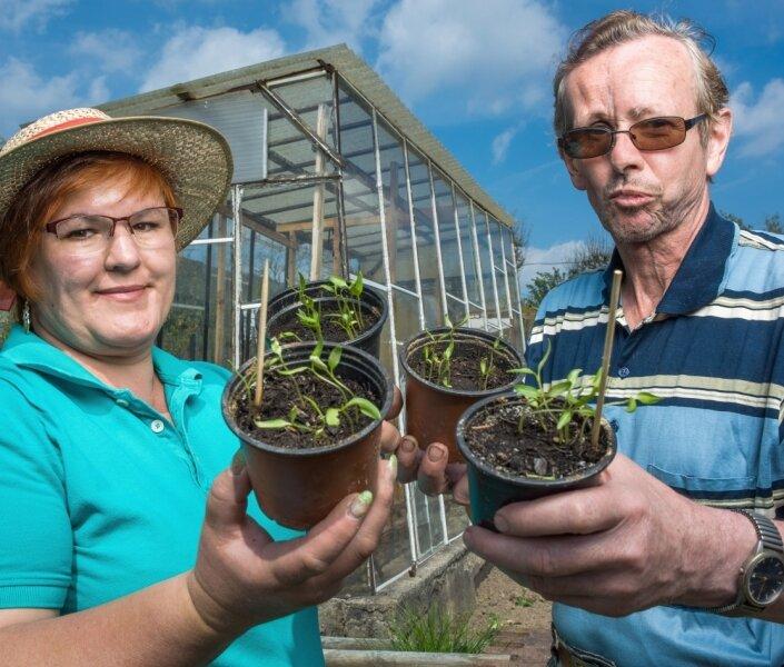 Noch winzig: Gartendoktor Katrin Keiner aus Dresden lobt die Vorarbeit von Hobbygärtner Frank Richter aus Chemnitz, der seine vorgezogenen Paprikapflanzen ins selbst gebaute Gewächshaus setzen will.