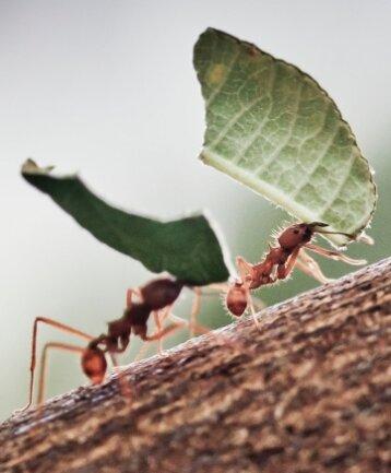 Ameisen waren offenbar die Übeltäter, die in Schönheide dafür sorgten, dass eine gut beleuchtete Loipe lange dunkel blieb.