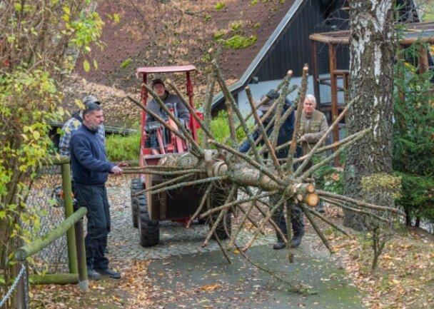 Auf den Wegen mit dem kleinen Traktor fahren - das geht im Auer Zoo der Minis nur ohne Besucher. Die Baumkrone ist für das Gehege der Afrikanischen Fleckenuhus gedacht.
