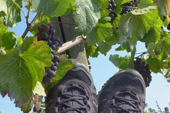 Füße hoch - nun müssten nur noch die Trauben in den Mund fallen.