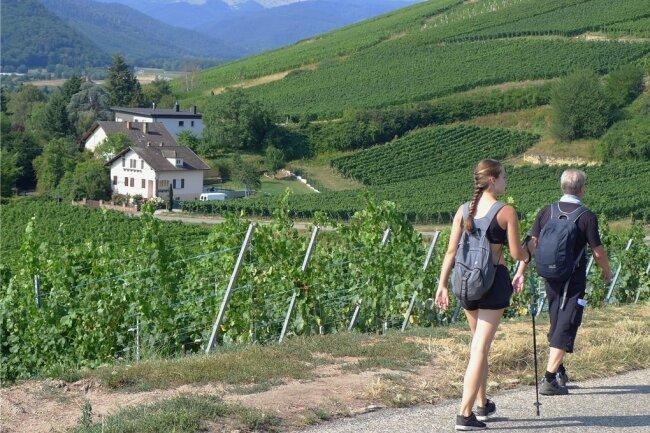 Täglich Berge hoch und nachmittags wieder runter - Alltag einer Rundwanderung im lieblichen Elsass.