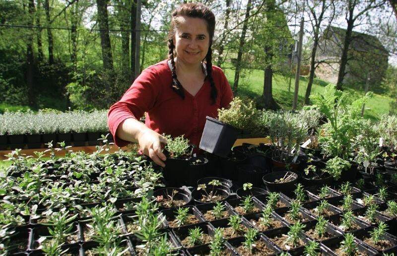 """<p class=""""artikelinhalt"""">Dorit Steidten aus Lobsdorf hat in diesen Tagen auf ihrem Kräuterhof alle Hände voll zu tun.</p>"""