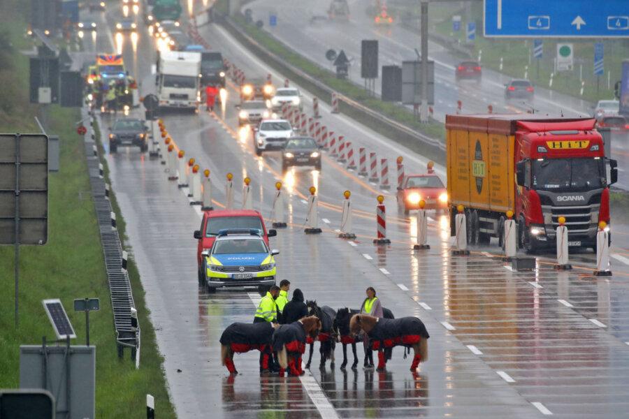 Transporter fing Feuer: Pferde auf A4