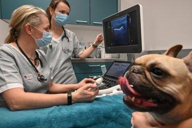 Wegen Magenproblemen wird die französische Bulldogge Laila im Fachzentrum für Kleintiermedizin in Röhrsdorf behandelt. Die Tierärztinnen Dr. Theresa Eulitz (links) und Doreen Meyer werten das Ultraschallbild aus.