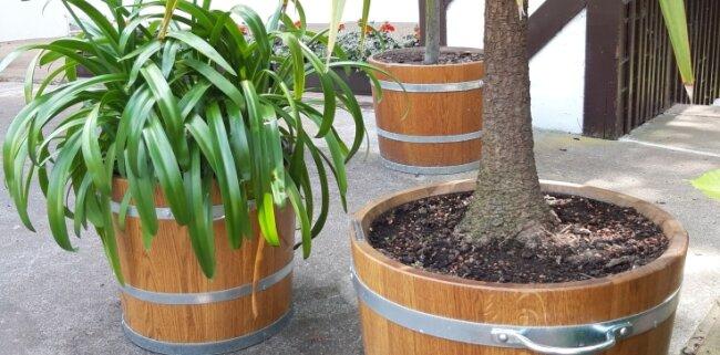 Auch neue Pflanzkübel finden sich nun im Schlossgarten.