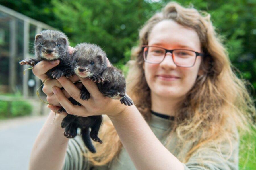 Nachwuchs bei Frettchen und Rebhuhn: Hallo, wir sind die Neuen im Zoo!