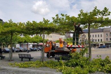 Die Bäume am Oelsnitzer Markt werden derzeit von Eberhard Beuchert beschnitten. Üblicherweise erledigt er diese Arbeit in der vegetationslosen Jahreszeit.