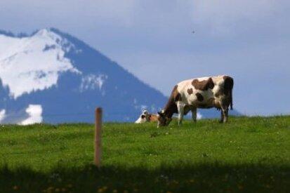 Ganz Österreich ab Sonntag kein Corona-Risikogebiet mehr
