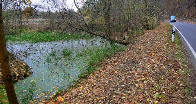 """In diesem kleinen Teich in Sachsenburg unweit der """"Fischerschänke"""" wurde der tote Biber gefunden."""