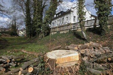 Die Überreste der Baumfällaktion an der Agricolastraße in Glauchau sind noch zu sehen.