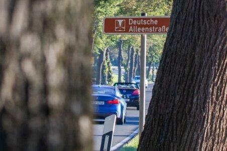 Prächtige Bäume an der B 92 zwischen Oelsnitz und Plauen: Dieser Abschnitt der Deutschen Alleenstraße steht vor einem Einschnitt.