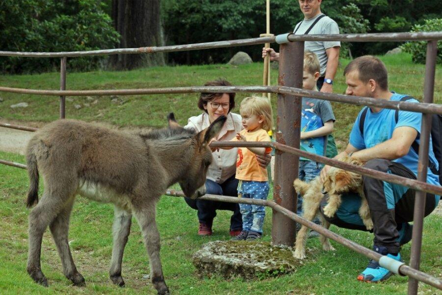 Die kleine Eselstute scheint Kinder zu mögen. Ohne Scheu kommt sie an den Zaun, das begeistert auch diese Familie, die zu Besuch in der alten Heimat ist.