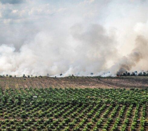 Nachhaltige Landwirtschaft sieht anders aus: Hinter einer Palmöl-Plantage im Osten der indonesischen Insel Sumatra brennt der Wald. Er wird durch die Brandrodung als Anbaufläche für weitere Plantagen vorbereitet.