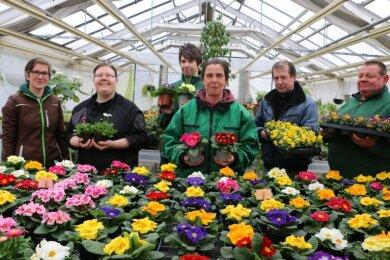 Gärtnereimeisterin Jasmin Döbel (links) leitet die Gärtnerei. Die Mitarbeiter Florentine Büttner, Martin Kirsten, Yvonne Groh, Jürgen Janson und Ingo Mocker freuen sich, dass ihre farbenprächtigen Frühblüher nun verkauft werden können.