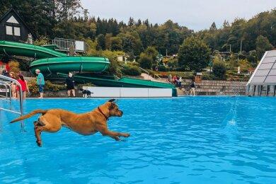 Annaberg-Buchholzer Badbetreiber sind auf den Hund gekommen: Viele Vierbeiner gingen in der Badeanstalt am Stangewald am Samstag fröhlich baden. Darunter auch Nala (18 Monate) von Halterin Annika Löffler.