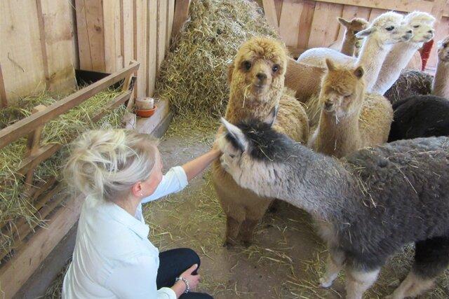 Mit den Alpakas beim Friseur
