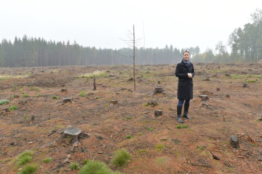 Man sieht den Wald vor lauter Baumstümpfen nicht mehr: Silke Grombach, als Amtsleiterin in der Stadtverwaltung und auch Freibergs oberste Forsthüterin, auf einer Fläche nahe des Waldbads. Auf vier Hektar mussten dort von Borkenkäfern befallene Fichten gefällt und entnommen werden.