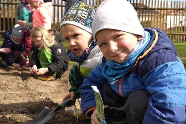 Junge Gärtner säen Gemüse für Kita