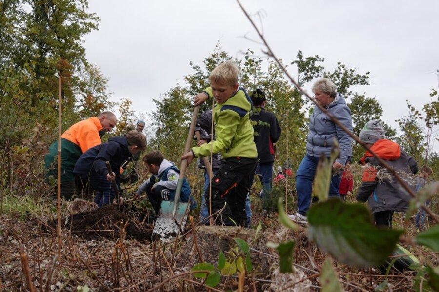 Kita-Kinder forsten ihren Wald wieder auf
