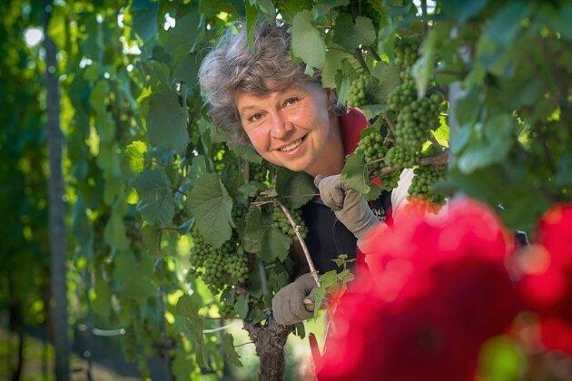 Noch selten: Eine Chefin im Weingut. Andrea Leder hat das Weingut Matyas in Coswig bei Dresden von ihren Eltern übernommen.