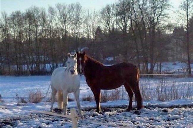 Sind nach einem unerlaubten Ausflug wieder wohlbehalten da: Shalina (l.) und Mili.