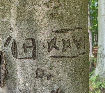 Mysteriöse Einritzungen an einer Buche im Wald an der Mönchszeche. Bislang sei nicht geklärt worden, was diese alten Zeichen genau bedeuten, erklärt Steffen Ulbricht.